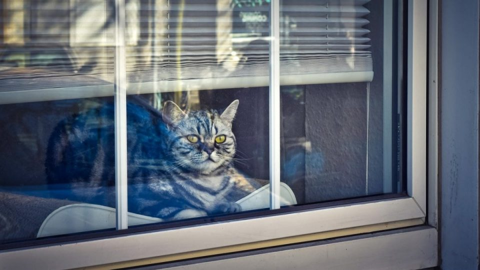 cat in window perch