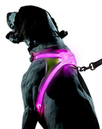 black dog wearing pink Noxgear illuminated dog harness