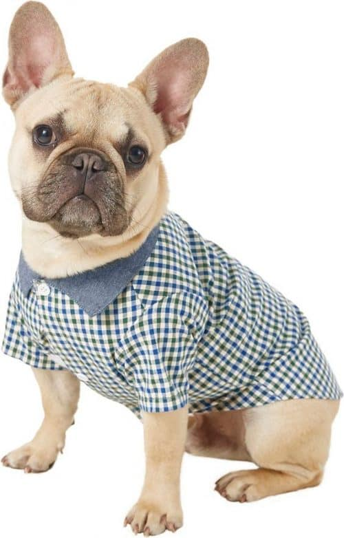04462a7167c3 Get your puppy ready for spring and summer with this stylish top. This  preppy button-down has a green