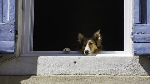 dog in screenless window