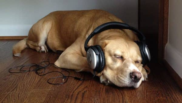 What Kind of Music Do Dogs Like?