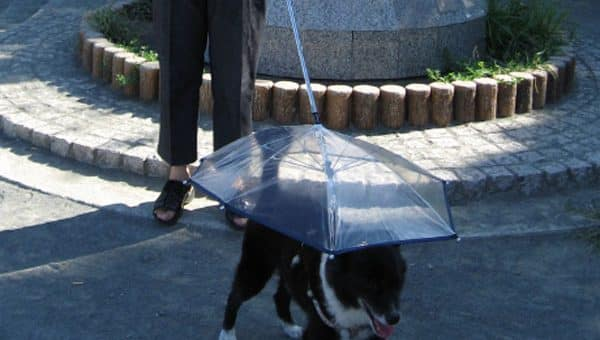 The 4 Best Umbrella Dog Leashes for 2019