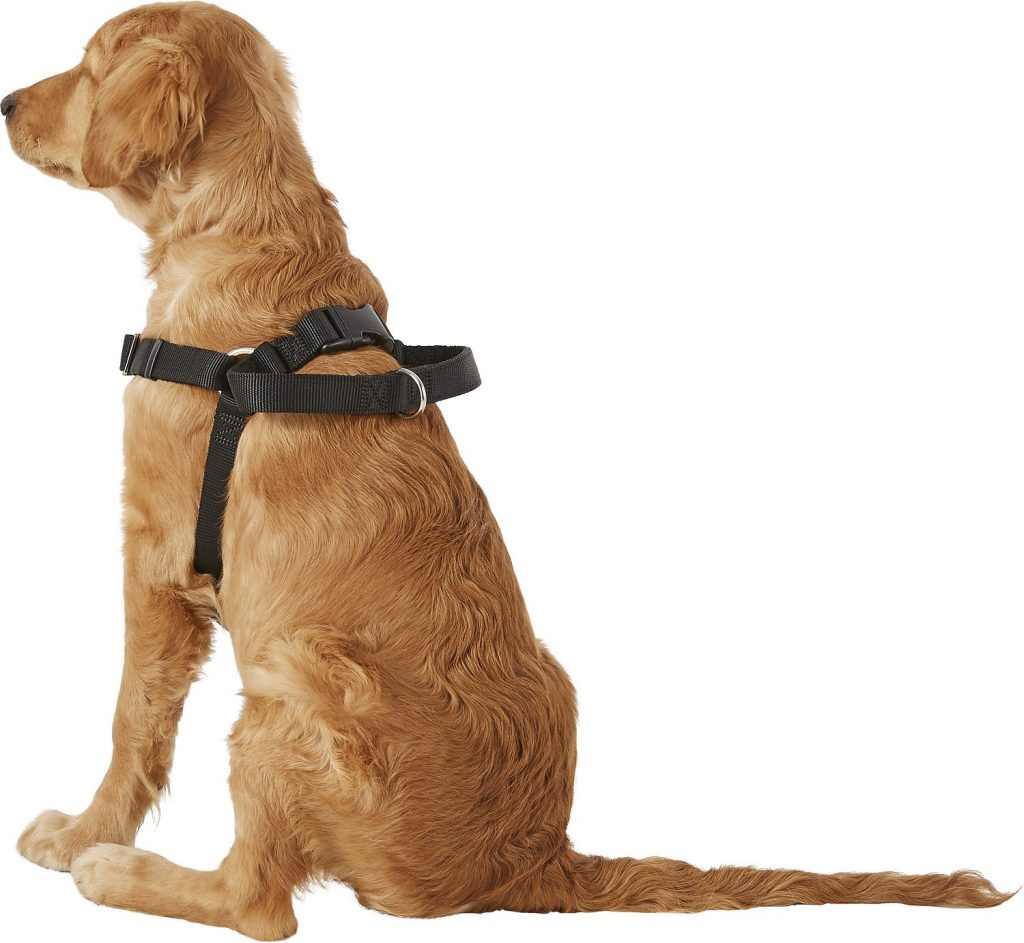 dog wearing Easy Rider harness