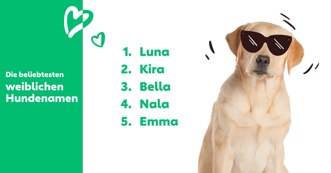 Luna, Kira, Bella, Nala, Emma