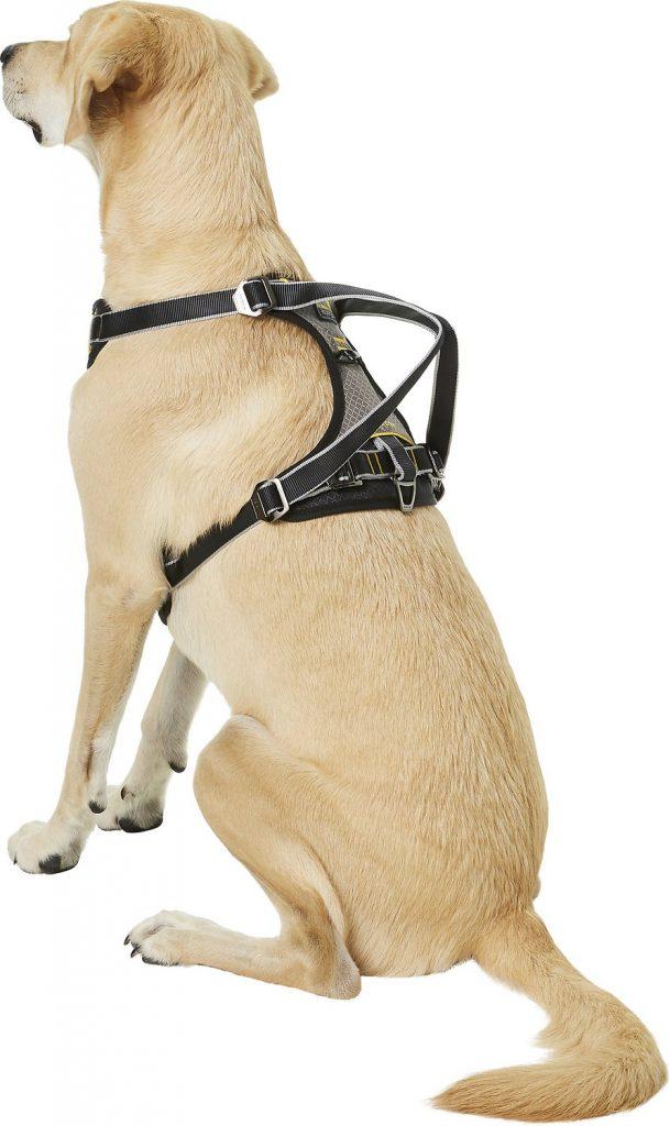 dog wearing Kurgo Impact car dog harness