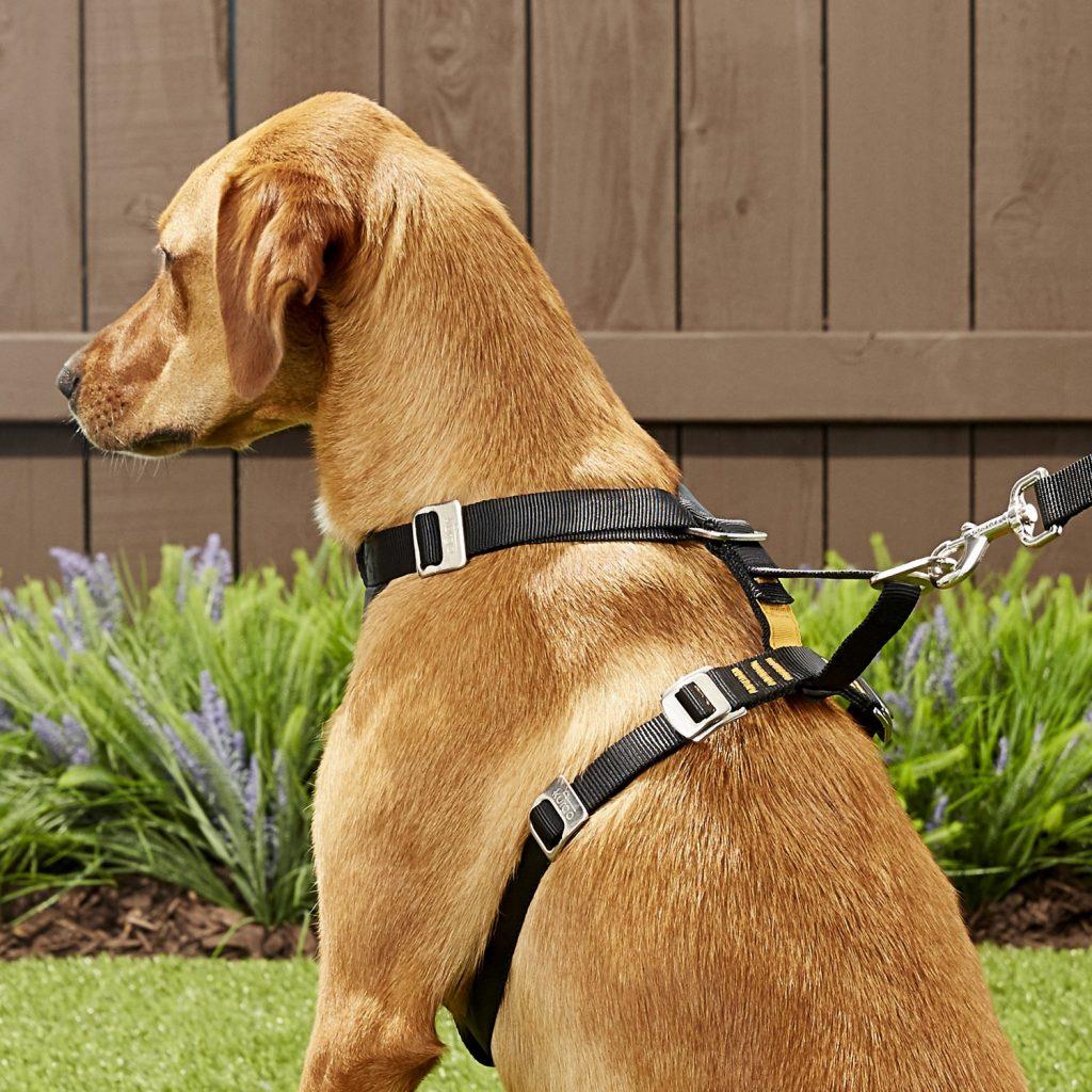 dog wearing Kurgo Tru-Fit car harness