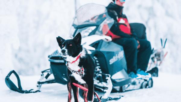 Meet Jett: Avalanche Rescue Dog and Ski Patroller