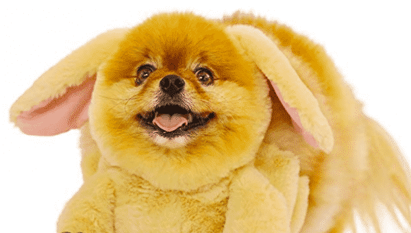 9 Dog Easter Outfits Your Dog Definitely Wants (Even if They Don't Know it)