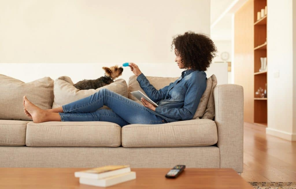 terrier and woman playing on couch