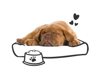 Tips for dog adoption