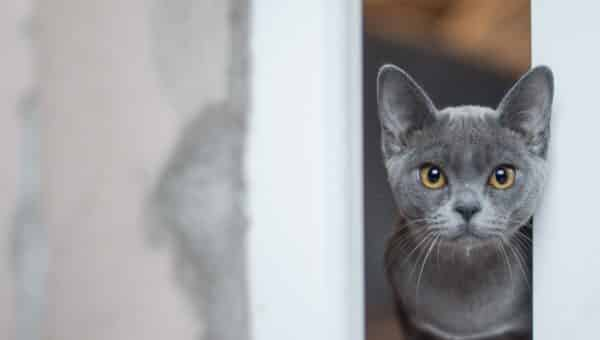 115 Best Gray Cat Names in 2019 for Your Silver, Blue, or Lilac Kitty