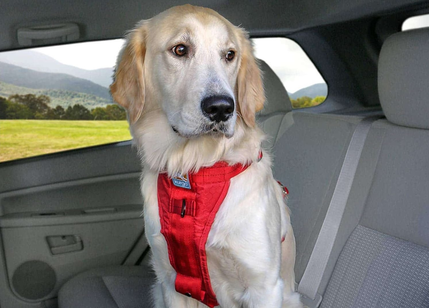 The 7 Very Best Car Harnesses For Dogs