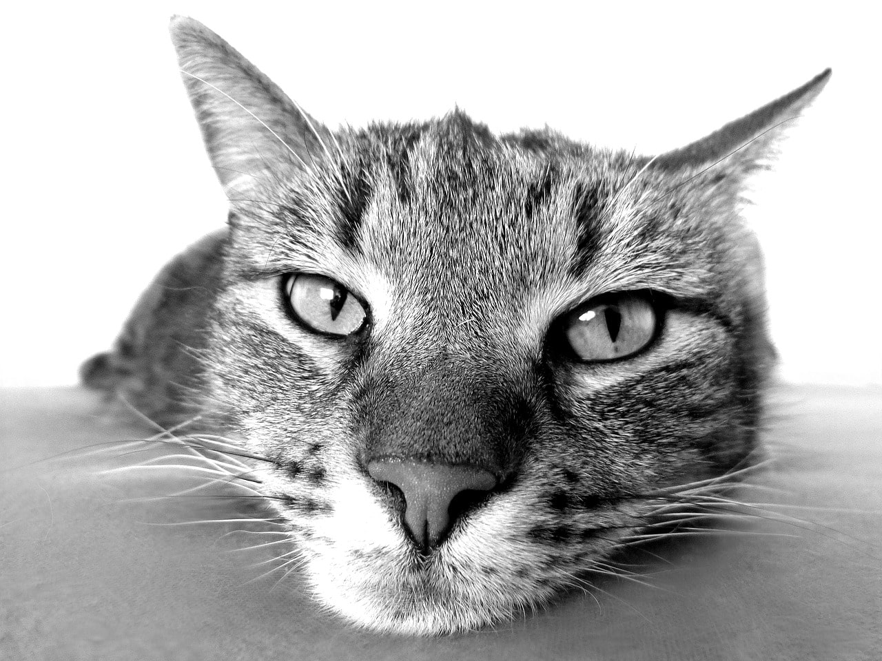 Is My Cat Bored How To Know And What To Do The Dog People By Rover Com