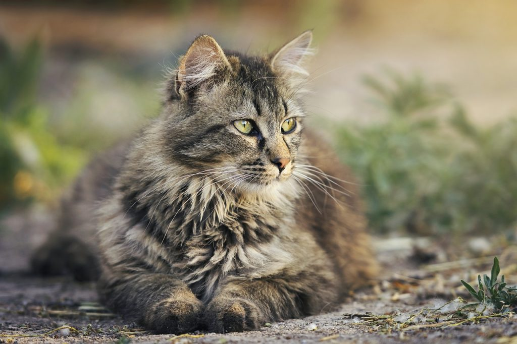The Best Cat Food For Weight Gain In 2019 The Dog People By Rover Com,How Long To Cook Chicken Breast In Instant Pot