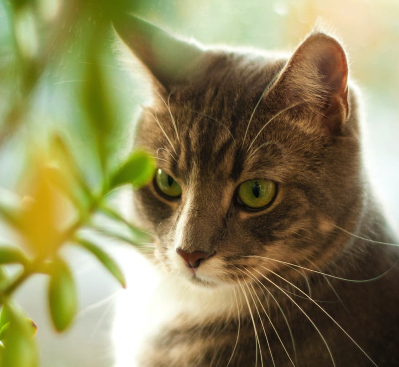 There are many plants poisonous to cats. This cat staring at a plant wants to know.
