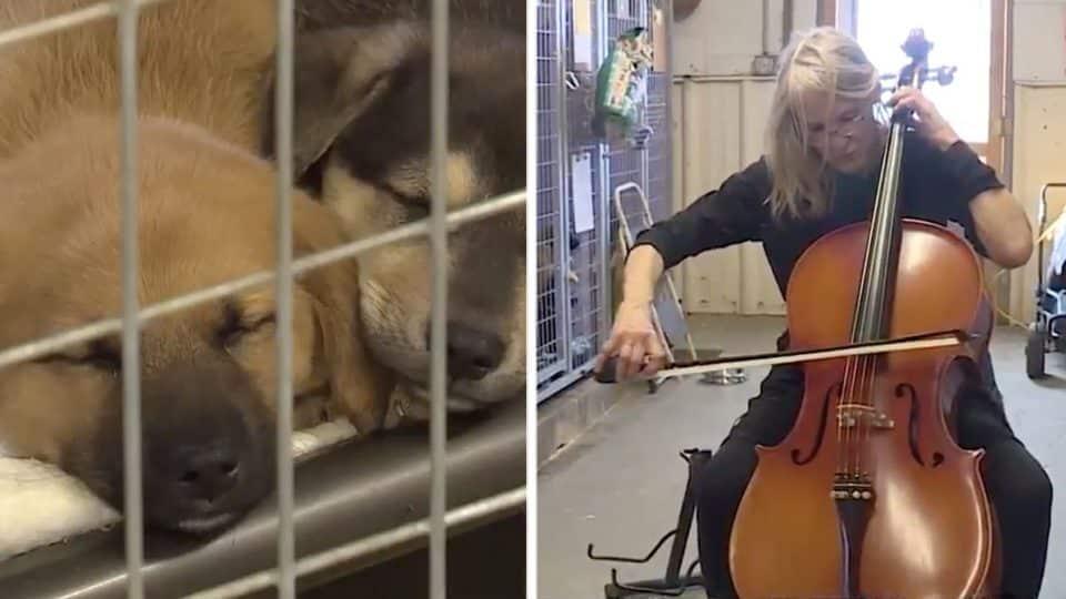 cellist serenades shelter dogs