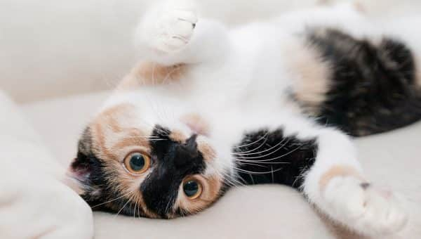 Why Are Cats So Cute?