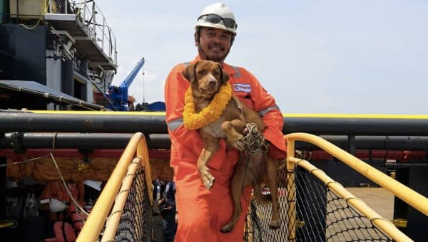 Dog Rescued 130 Miles Out to Sea by Oil Rig Workers