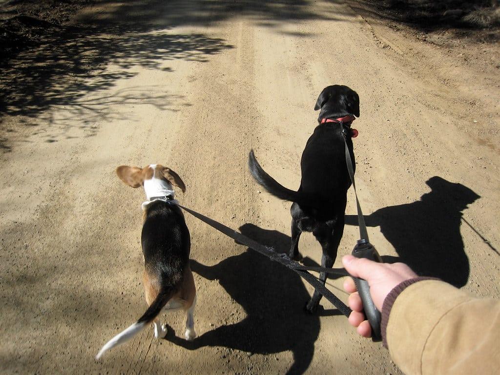 12 Double Little Dog Walker Leash coupler for 2 small dogs wide Biothane Leash Splitter Waterproof Two dogs on one leash 12mm