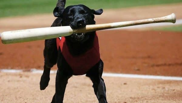 Umpire Steals Bat from Beloved Bat Dog, Gets Loudest Boo in Baseball History