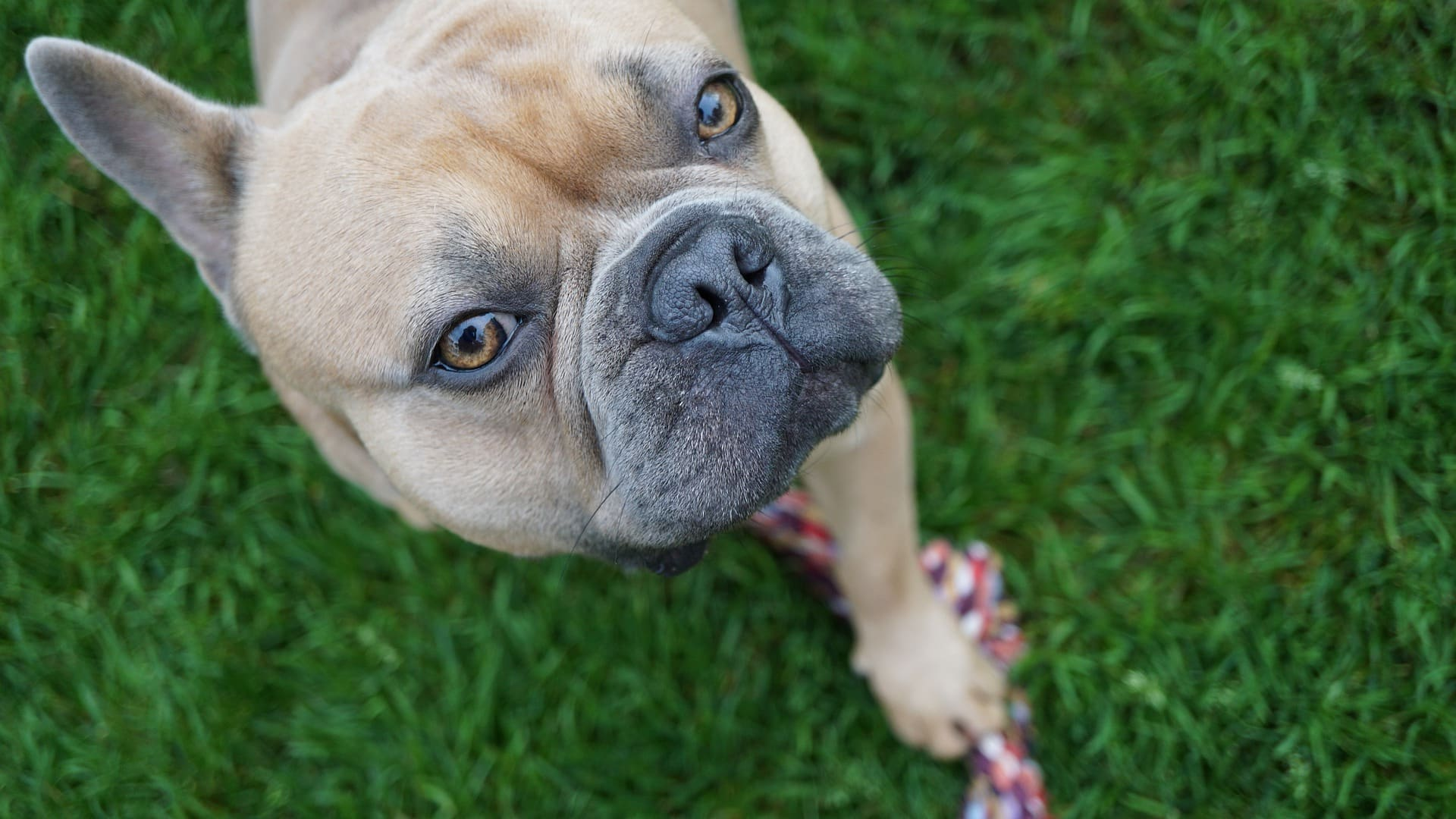 10 phrases your dog would say to you
