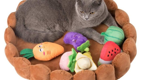 Fruit Tart Pet Beds Are All the Rage and These Are Our Favorites