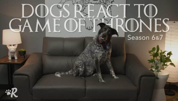 Dogs React to Famous 'Game of Thrones' Moments in Hilarious Video