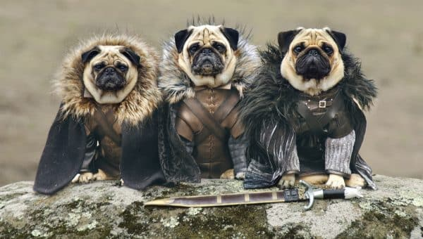 60 Great Dog Names for Game of Thrones Fans