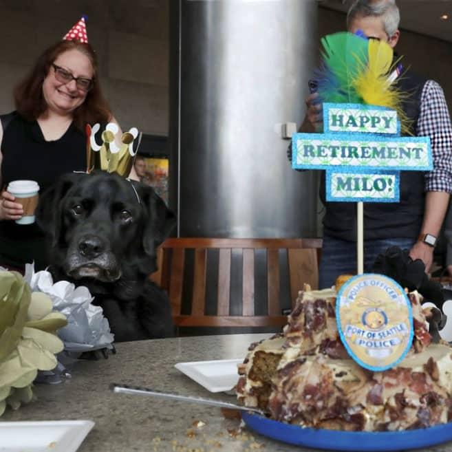 Explosive Detecting K9 Officer Has The Best Retirement