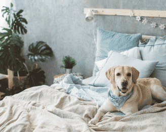 What plants are safe to dogs? This dog on a bed wants to know.