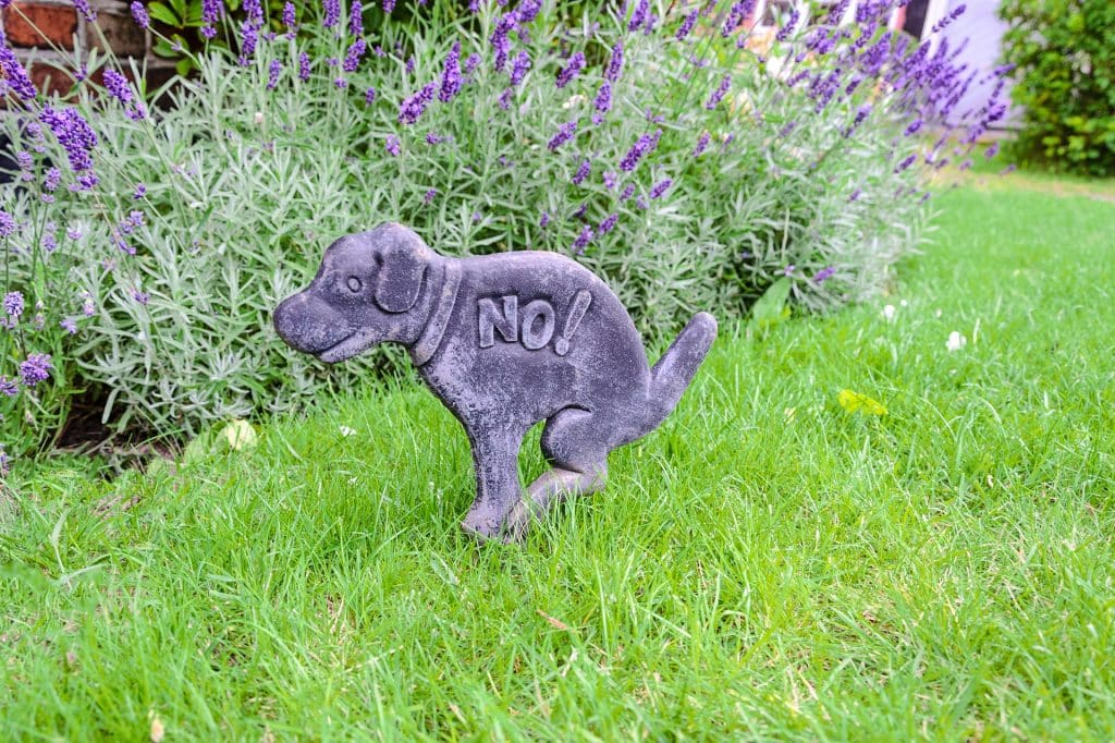 The Ultimate Dog Proof Gardening Guide Dog Proof Gardens