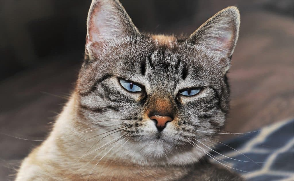 Sensitive Stomach Cat Food Best Cat Food For Sensitive