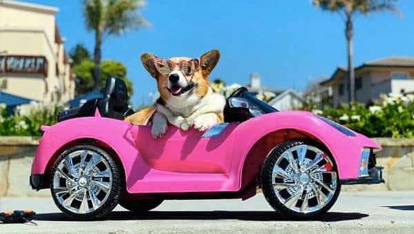 This Corgi With a Porsche is Bringing Extra Sunshine to California Town