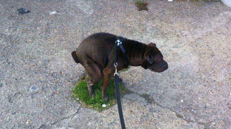 Natural ways to get dog to poop