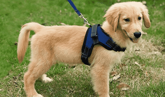 The 5 Best Puppy Harnesses for 2019