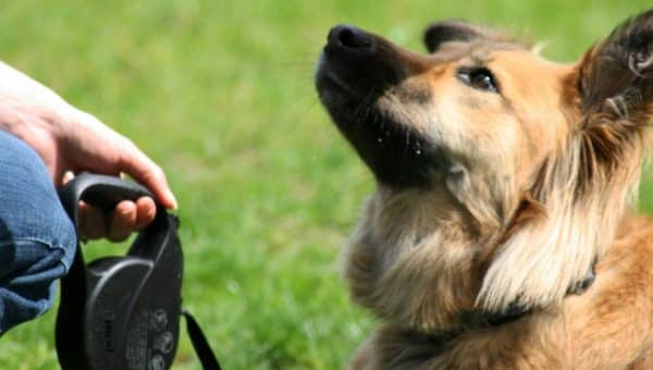 The 7 Most Important Dog Training Skills