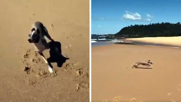 Whippet's Glorious Beach Zoomies Will Have You Ready for Summer