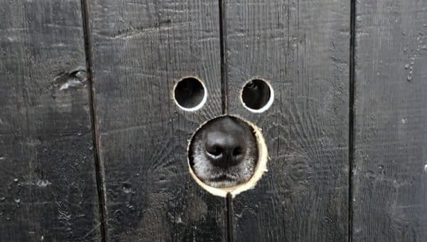 windows in fence for dogs