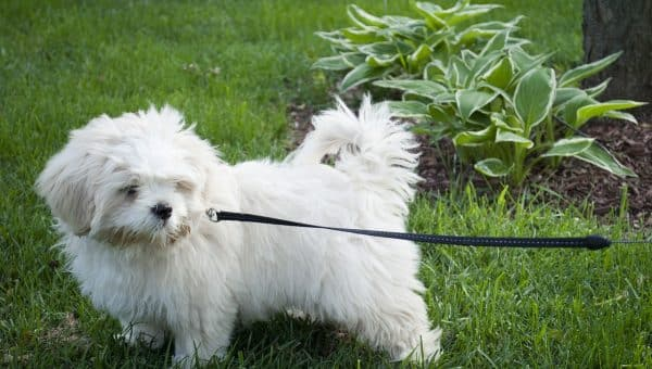 The 5 Best Yard Leashes for Dogs in 2019