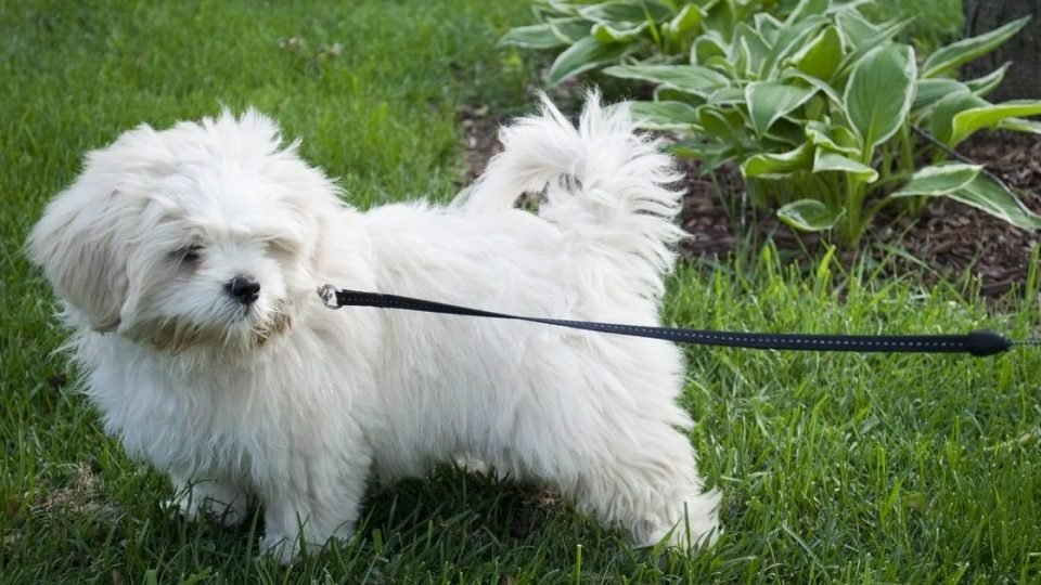 dog on leash in yard