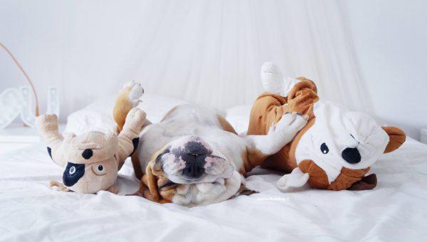 5 blogs canins qui ont du chiens ! Nos préférés sont…