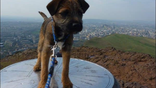 The Best Dog Walks in and Around Edinburgh