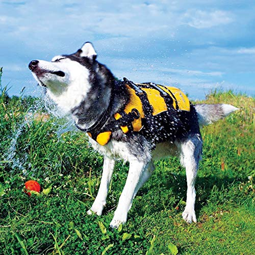 dog in life jacket shaking off water