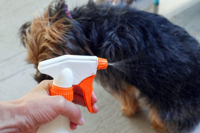 spray déodorant pour chien