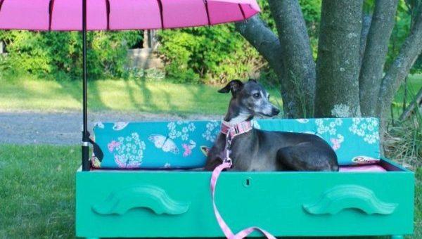 DIY Ideen für Hunde