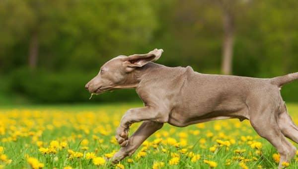 Vurderer du å jogge med hunden din? Her er hva du trenger å vite først.