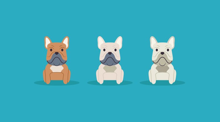 Illustration showing the different colourings of French Bulldogs, faun, cream and white.