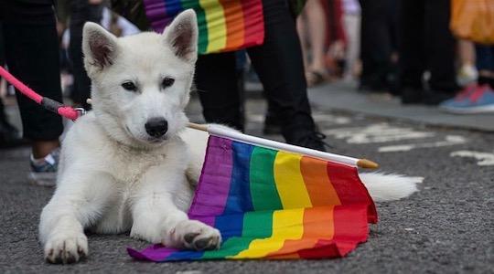 11 x Pride Volgens De Honden van Instagram