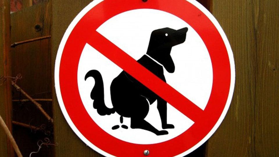 Journal De La Rue No Dog Pooping Sign