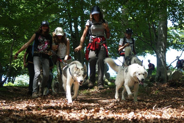 randonnée avec chien dans la forêt de Fontainebleau près de Paris